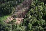 Deforestation for oil palm -- sabah_1207