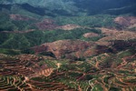 Deforestation for oil palm -- sabah_1209