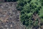 Deforestation for oil palm -- sabah_1215