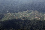 Deforestation for oil palm -- sabah_1239
