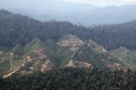 Deforestation for oil palm -- sabah_1247