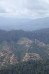 Deforestation for oil palm -- sabah_1252