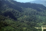 Oil palm plantation -- sabah_1296