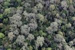Virgin hutan hujan di Malaysia
