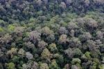 Untouched hutan hujan