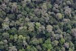 Untouched hutan hujan di Sabah