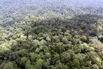 Oldgrowth hutan hujan di Sabah, Malaysia