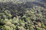 Oldgrowth hutan hujan di Sabah