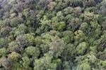 Lama-pertumbuhan hutan hujan di Sabah