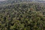 Virgin hutan hujan di Imbak Canyon, Sabah