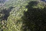 Oldgrowth hutan hujan