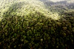 Oldgrowth hutan hujan di Imbak Canyon, Malaysia