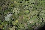 Lama-pertumbuhan hutan hujan di Imbak Canyon, Sabah, Malaysia