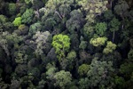 Primary rainforest in Imbak Canyon, Malaysian Borneo