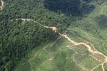 Logging road -- sabah_1488