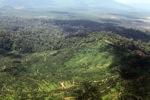 Oil palm plantation -- sabah_1639