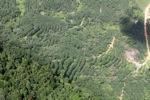 Hutan dan pohon tanaman