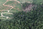 deforestation for oil palm -- sabah_1662