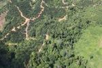 deforestation for oil palm -- sabah_1676