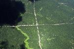 Oil palm plantation -- sabah_1730
