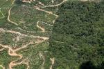 Oil palm plantation -- sabah_1765