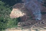Api menyala di sebuah perkebunan kelapa sawit