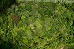 Kalimantan hutan hujan