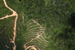 deforestation for oil palm -- sabah_1885