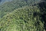 Rainforest di Borneo Malaysia