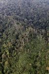 Hutan hujan di Kalimantan
