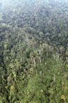 Dipterocarp hutan di Imbak Canyon