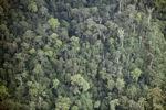Forest in Sabah, Malaysia -- sabah_2009