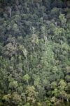 Hujan hutan di Kalimantan