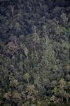 Hutan di Kalimantan