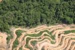 Deforestation in Borneo -- sabah_2027
