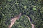 Rain forest in Malaysian Borneo
