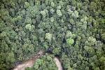 Hutan di Sabah