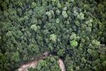 Borneo rainforest -- sabah_2057