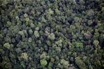 Borneo hutan hujan di Malaysia