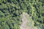 Deforestation in Borneo -- sabah_2074