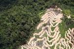 Deforestation in Borneo -- sabah_2098