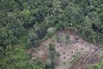 deforestation for oil palm -- sabah_2183