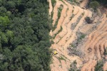 deforestation for oil palm -- sabah_2212