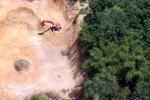 Deforestation in Borneo -- sabah_2279