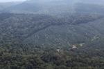 Kelapa sawit estate