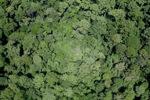 Jungle in Malaysian Borneo