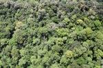 Hutan di Kalimantan Malaysia
