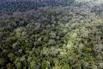 Lama-pertumbuhan hutan hujan dataran rendah di Kalimantan