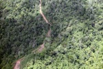 Deforestasi di Kalimantan