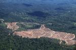 Deforestation in Borneo -- sabah_2458